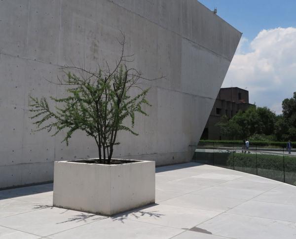 1528302892edit_1527188586edit_Visita_patio_plantas